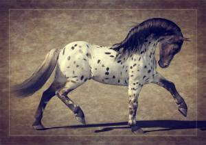 Daz Horse 2 appaloosa pony. Daz Studio iRay 3d Horse illustration style