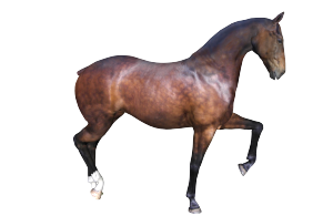 A new 3d Horse model and a new horse texture