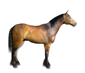 start of a new texture for the LowRez horse model from Daz3d