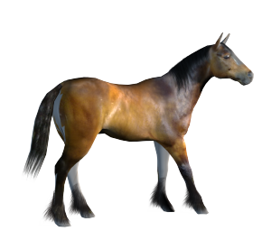 Daz3d Low Resoloution (LoRez) Horse with my new texture