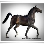 Dark bay texture based on my own thoroughbred mare Millennium Horse model texture