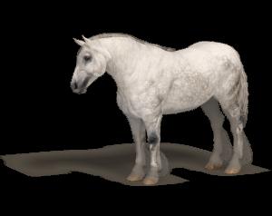 draft horse for Poser Millennium Horse model by Daz3d