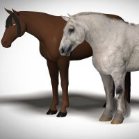 draft horse for Millennium Horse 3d