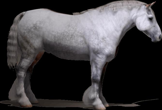 Daz3d Millennium Horse (MilHorse) custom heavy horse morph and texture