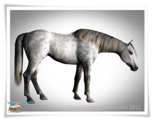 Daz Horse 2 new morph