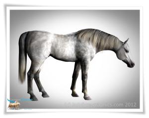 morph for Daz Horse 2