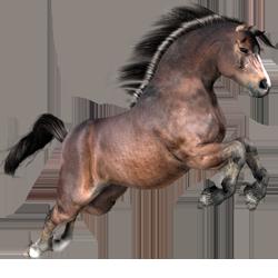 Resources for the Daz3d Millennium Horse