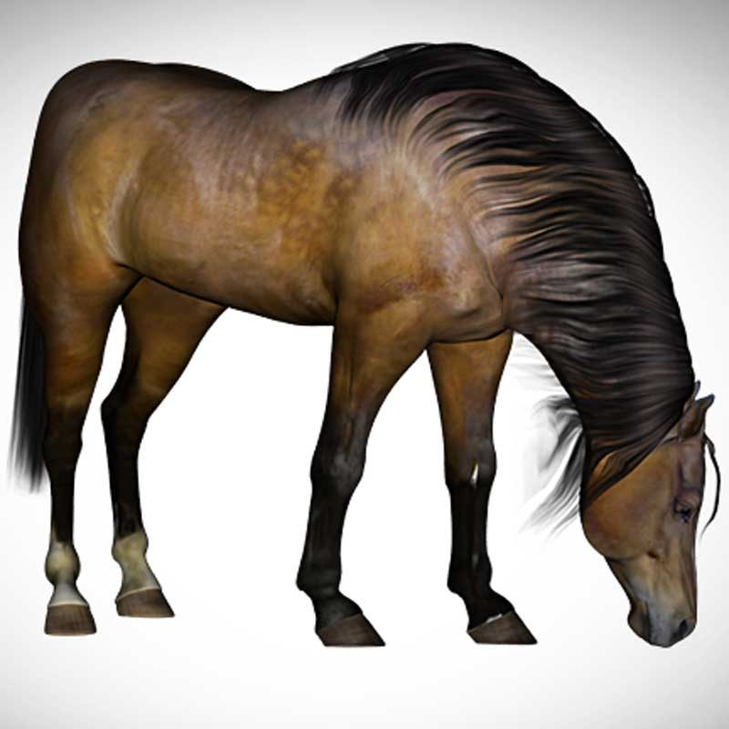 Daz Horse 2 new improved mane model