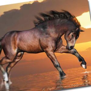 native_pony_millennium_horse_daz3d_001