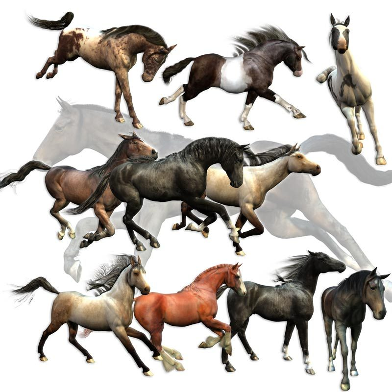 Millennium Horse Ultimate Poses Set for Poser, Daz Studio and Carrara