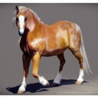 Crusader my Welsh Cob in 3d!