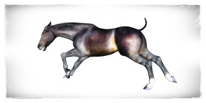 thoroughbred 3d horse model