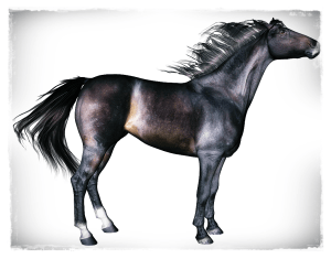 Thoroughbred horse character for Daz Horse 2
