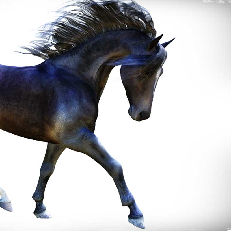 Daz Horse 2 – thoroughbred digital clone & new render