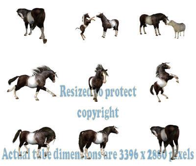 Cute Pony Tube for Paintshop Pro Image 2