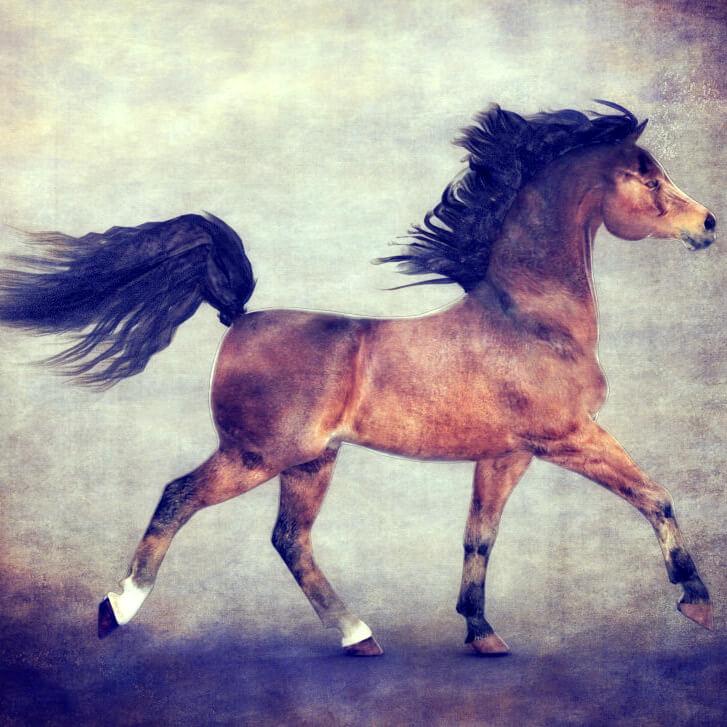 Conforming mane for Daz Horse 2 freebie download