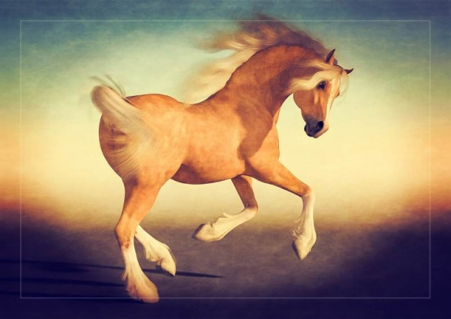 Poser Horse Palamino Hivewire3d Harry Arabian Morph Ladyfyre Graphics Poser and Daz Studio content