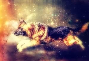 3d rendering of my beloved German Shepherd Dog, Shadow
