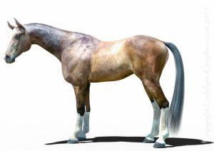 Hivewire Horse Akhal Teke 3d Horse model Custom Character