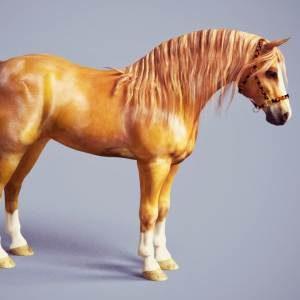 Daz Horse 2 3d Render Gallery | Daz Studio | Carrara | Poser