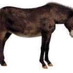 Free Donkey Texture for Daz Zebra