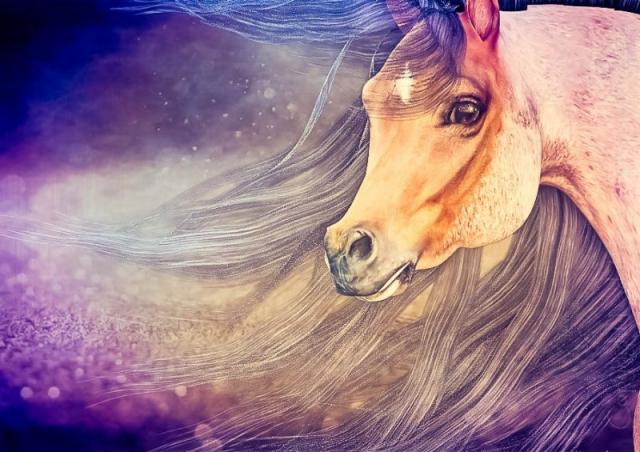 Hivewire Horse Roan Arabian