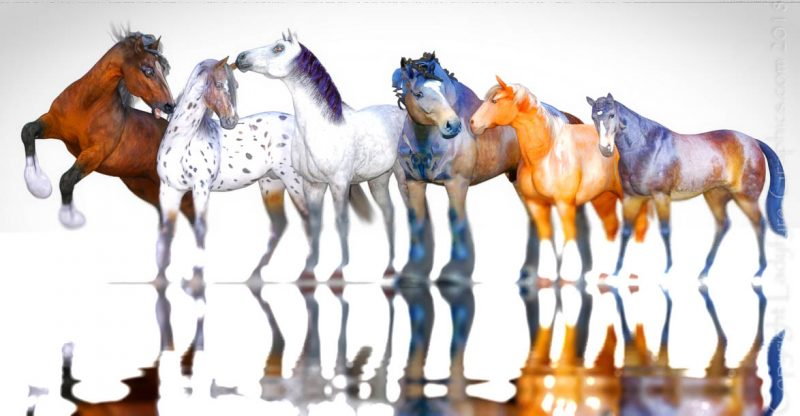 3d Horse model evolution for Poser & Daz studio
