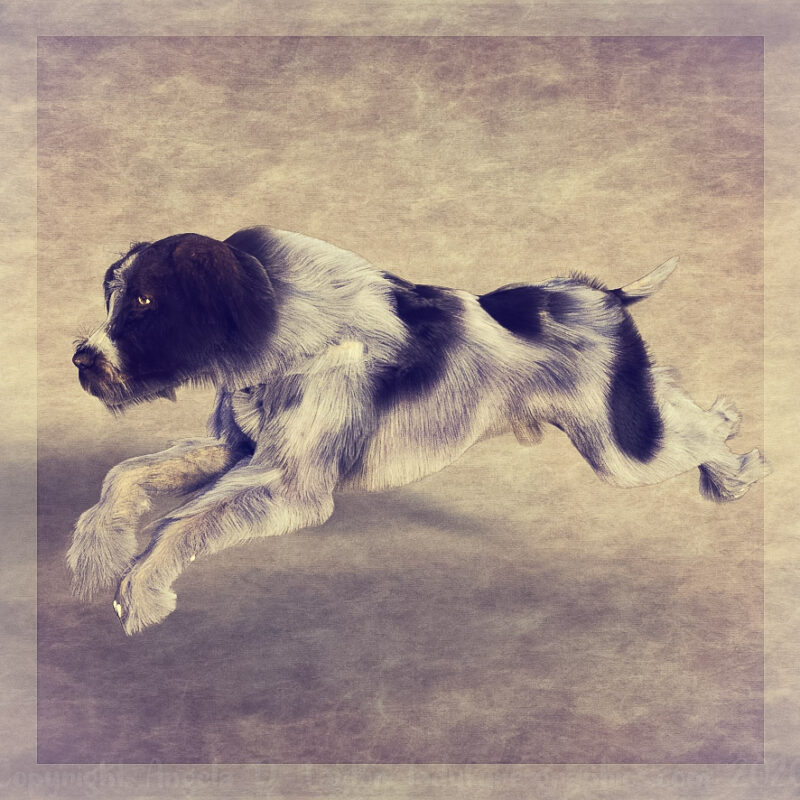 Millennium Dog SBH Experiment 1