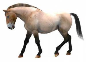 Free wild and primitive horse texture for Poser 3,4 and 5